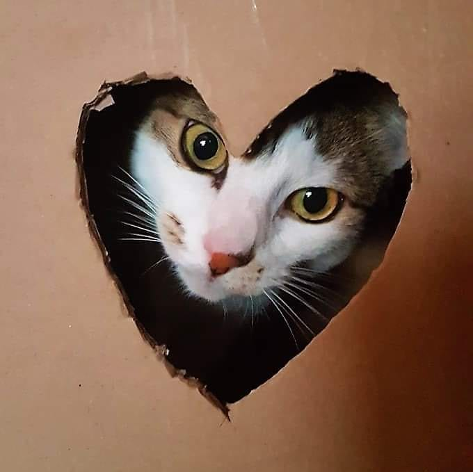 Casitas para gatitos DIY