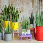 Sansevieria: tipos, cuidados, beneficios y como te ayudar a decorar el interior de tu casa